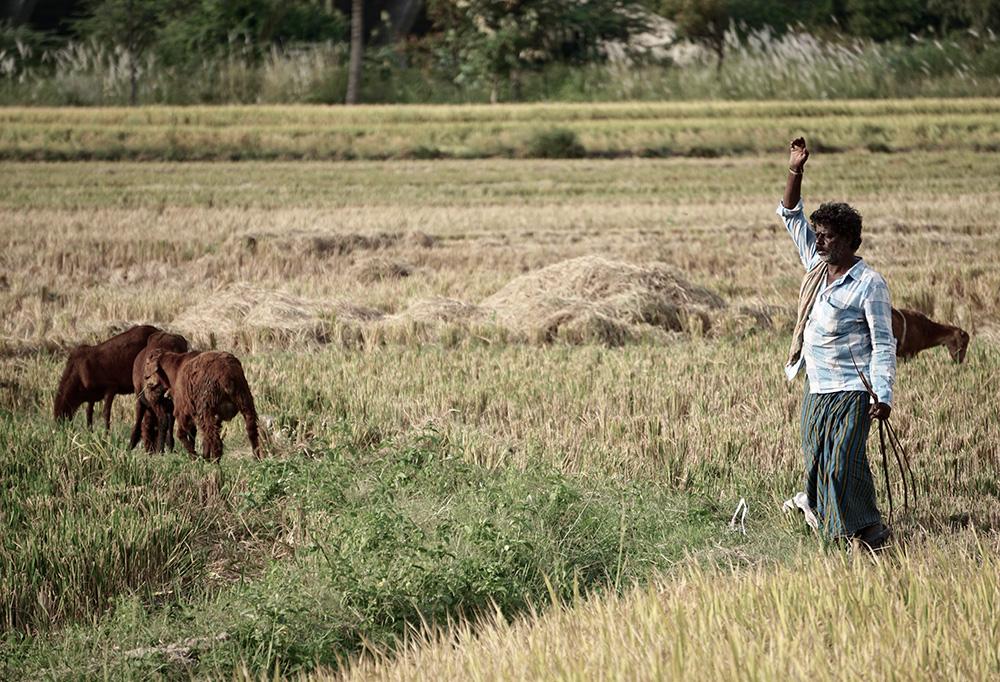 Het verhaal van de Chinese wijze boer en zijn paard