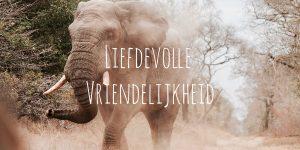 liefdevolle vriendelijkheid
