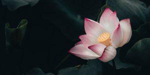 Juiste intentie boeddhisme